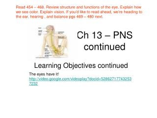 Ch 13 � PNS continued