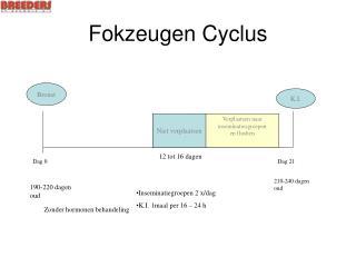 Fokzeugen Cyclus