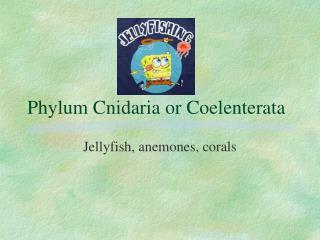 Phylum Cnidaria or Coelenterata