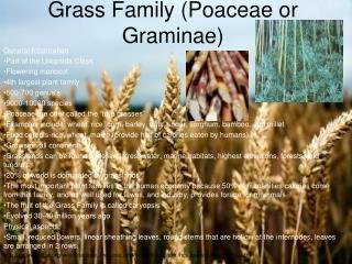 Grass Family (Poaceae or Graminae)