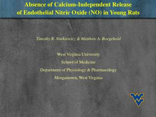 Absence of Calcium-Independent Release of Endothelial Nitric Oxide (NO) in Young Rats