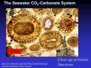 The Seawater CO 2 -Carbonate System