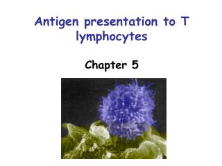 Antigen presentation to T lymphocytes  Chapter 5