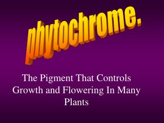 The Pigment That Controls Growth and Flowering In Many Plants