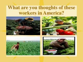What are you thoughts of these workers in America?