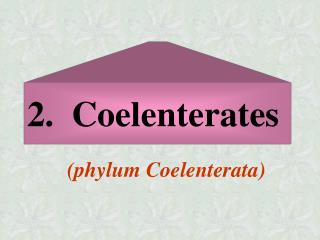 2.  Coelenterates