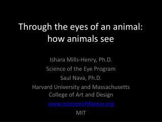 Through the eyes of an animal: how animals see