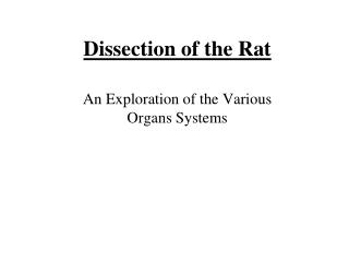 Dissection of the Rat