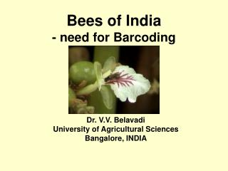 Bees of India  - need for Barcoding