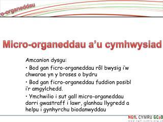 Amcanion dysgu:  Bod gan ficro-organeddau rôl bwysig i'w chwarae yn y broses o bydru