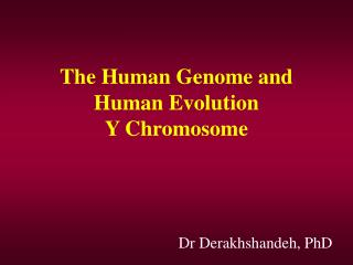 The Human Genome and Human Evolution Y Chromosome