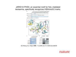 GG Wang  et al. Nature 000 , 1-5 (2009) doi:10.1038/nature0 8036
