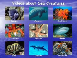 Videos about Sea Creatures