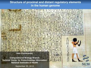 Structure of proximal and distant regulatory elements  in the human genome