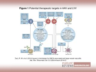 Figure 1  Potential therapeutic targets in AAV and LVV