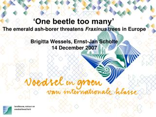 �One beetle too many� The emerald ash-borer threatens  Fraxinus  trees in Europe