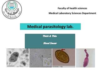 Blood Protozoa  Plasmodium species