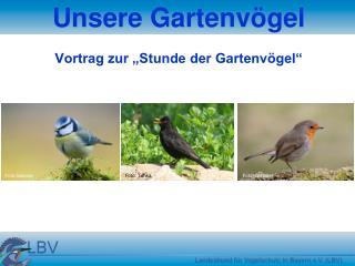 """Unsere Gartenvögel Vortrag zur """"Stunde der Gartenvögel"""""""