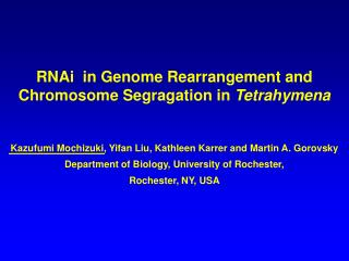 RNAi  in Genome Rearrangement and Chromosome Segragation in  Tetrahymena