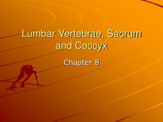 Lumbar Vertebrae, Sacrum and Coccyx