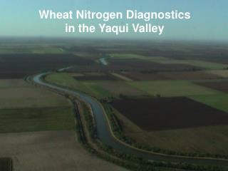 Wheat Nitrogen Diagnostics in the Yaqui Valley