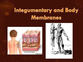 Integumentary and Body Membranes