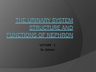 THE URINARY SYSTEM  STRUCTURE AND FUNCTIONS OF NEPHRON