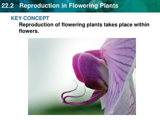 KEY CONCEPT Reproduction of flowering plants takes place within flowers.