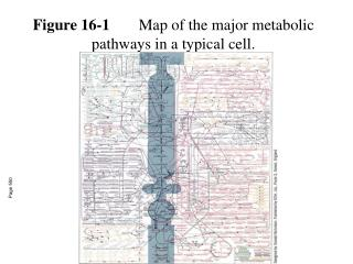 Figure 16-1 Map of the major metabolic pathways in a typical cell.