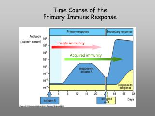 Time Course of the Primary Immune Response