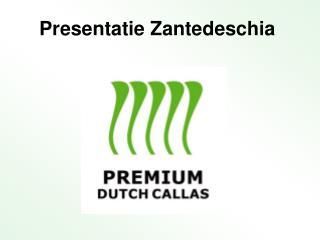 Presentatie Zantedeschia