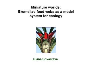 Miniature worlds: Bromeliad food webs as a model system for ecology