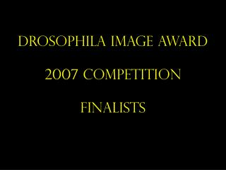 Drosophila Image Award 2007 Competition Finalists