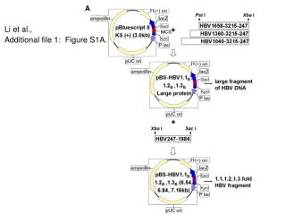 Li et al.,  Additional file 1:  Figure S1A.