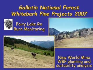 Gallatin National Forest Whitebark Pine Projects 2007