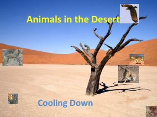 Animals in the Desert