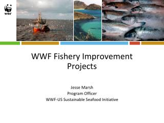 WWF Fishery Improvement Projects