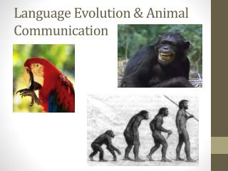 Language Evolution & Animal Communication