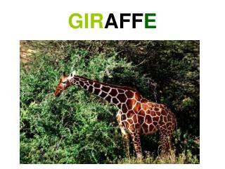 GIR AFF E