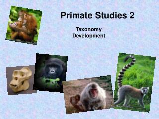 Primate Studies 2