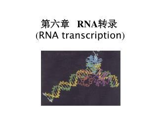 第六章    RNA 转录 ( RNA transcription )