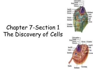 Chapter 7-Section 1 The Discovery of Cells