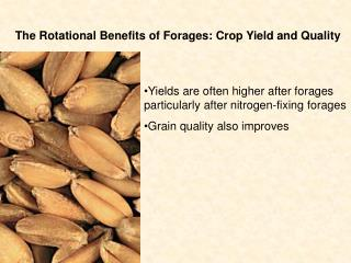 The Rotational Benefits of Forages: Crop Yield and Quality