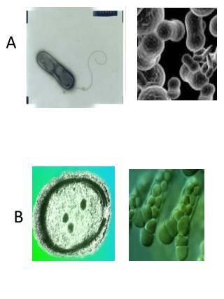 microbe sort images