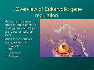 I. Overview of Eukaryotic gene regulation