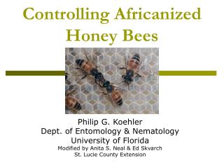 Controlling Africanized Honey Bees