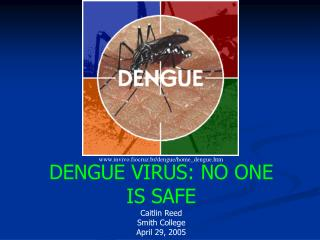 DENGUE VIRUS: NO ONE IS SAFE Caitlin Reed Smith College April 29, 2005