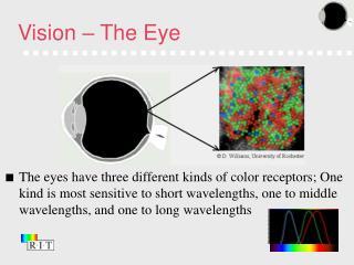 Vision – The Eye