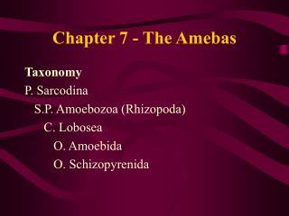Chapter 7 - The Amebas