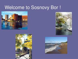 Welcome to Sosnovy Bor !